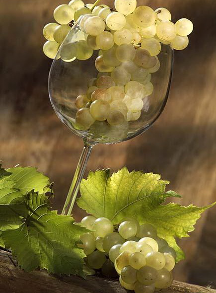 http://www.tamjanika.rs/images/galerija/wine_glass_filled_with_bunch_of_white_grapes_065615.jpg